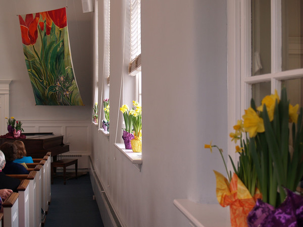 """Tulip with Pushkinia"" banner in Perkasie Mennonite Church meetingroom. © Anna Lisa Yoder"