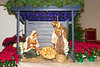 Church Sanctuary Crèche with Baby Jesus