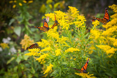 Monarch butterflies were everywhere!  I felt like it was a big hug of encouragement from God!