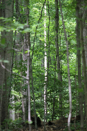 Sacred Grove Photos