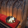 Budge the Cathedral cat.