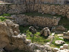 Ruins of ancient medicinal baths;Christ may have healed the paralytic near here.