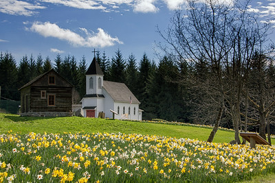 Freeborn Lutheran Church Daffodil Hill