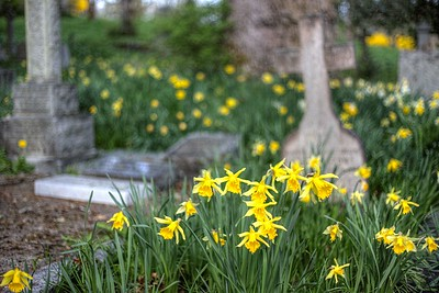 """The Anglican Parish of St. Peter, Quamichan - Cowichan Valley, Vancouver Island, BC, Canada Visit our blog """"The Hues Of Spring"""" for the story behind the photo."""