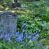 """Westholme Cemetery - All Saints Anglican Church - Crofton BC Canada Visit our blog """"<a href=""""http://wp.me/p1fizW-aw"""">A Peaceful Visit With History</a>"""" for the story behind the photos."""