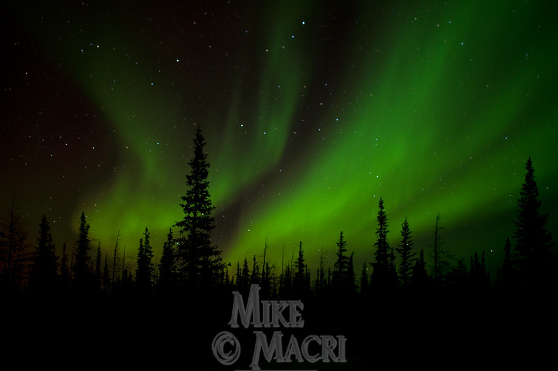 Aurora borealis (Northern lights) over boreal forest.
