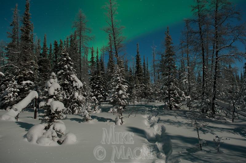 Moonlight snowshoeing.