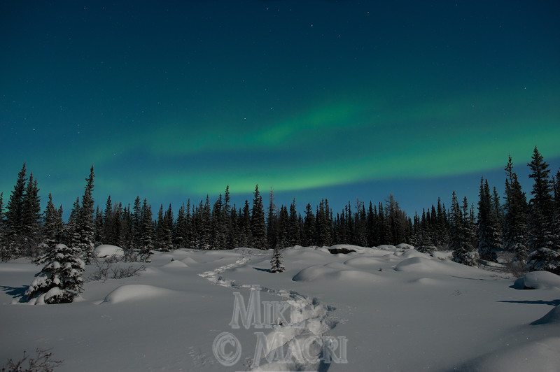 moonlight snowshoeing # 4