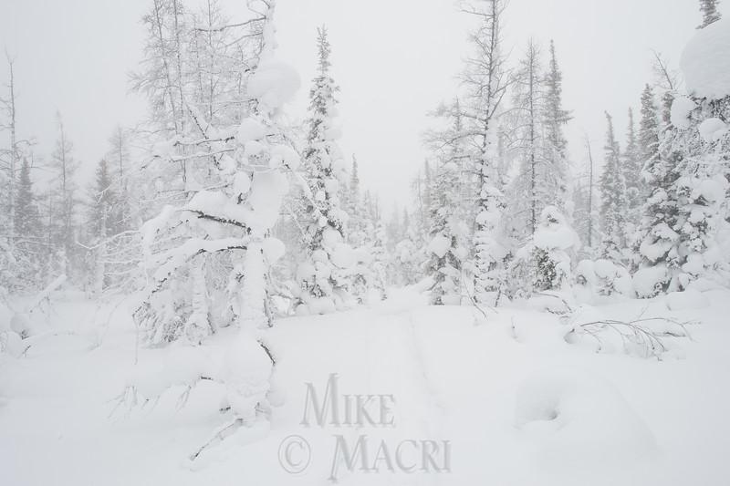 Boreal blizzard
