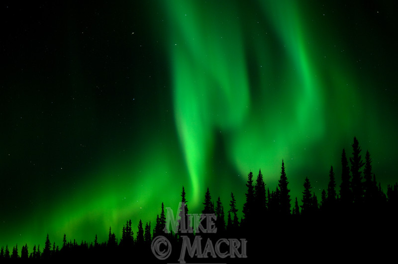 Aurora over boreal forest
