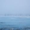 Taiga blizzard #2