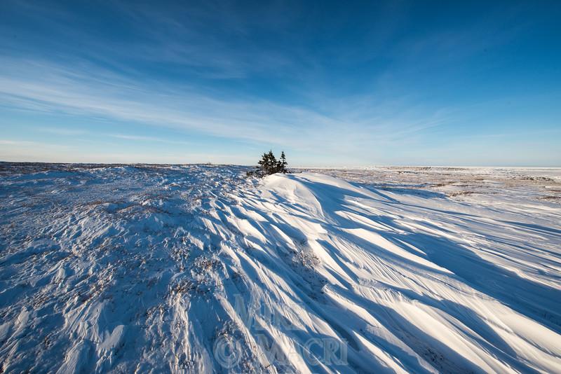 tundra drift