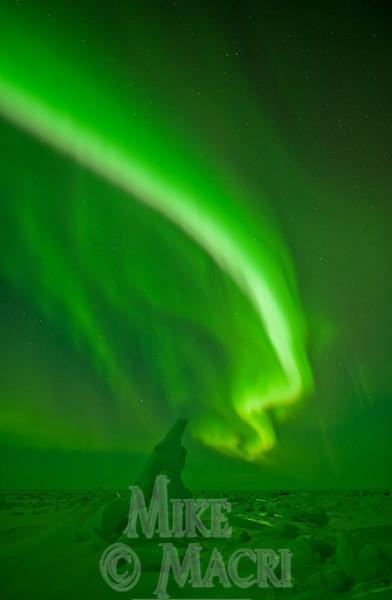 aurora borealis at Hudson Bay floe edge 11