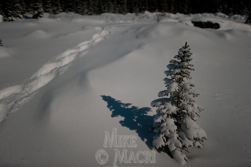 moonlight snowshoeing # 3