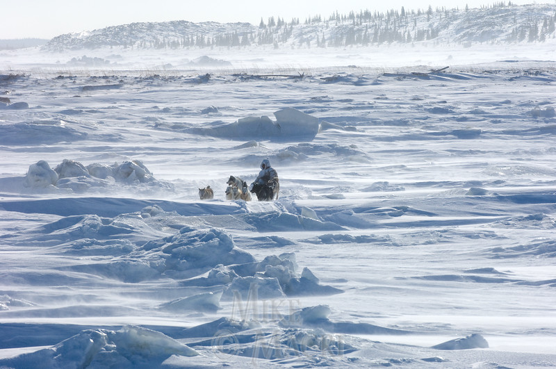 Traditional Inuit dog musher crossing Churchill River.