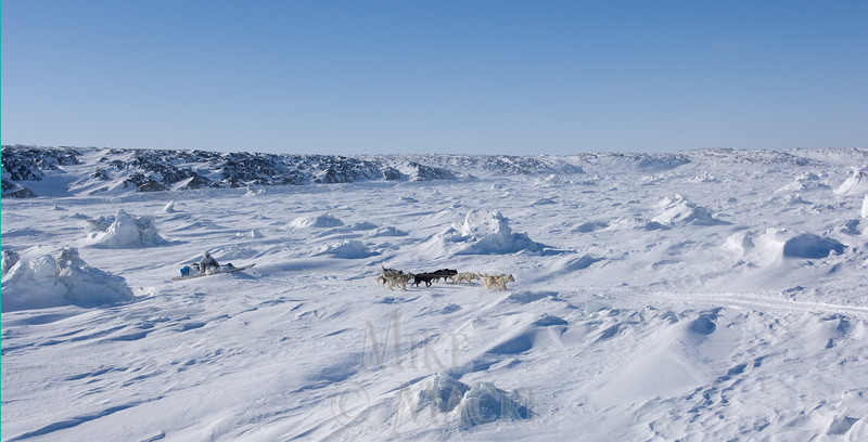 Traditional Inuit dog musher traveling sea ice.