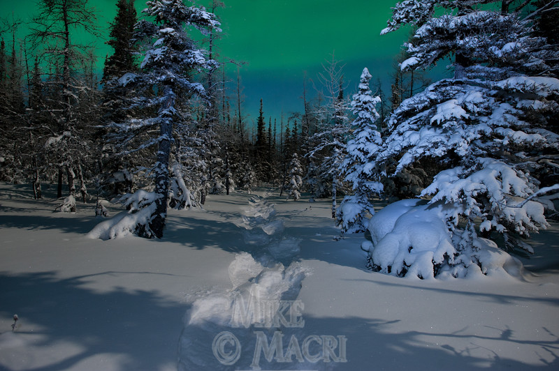 moonlight snowshoeing #2