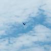 An eagle keeps an eye on us.