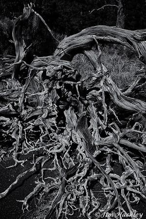 Spaghetti Roots