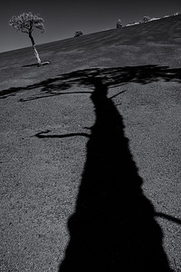 Cinder Shadow