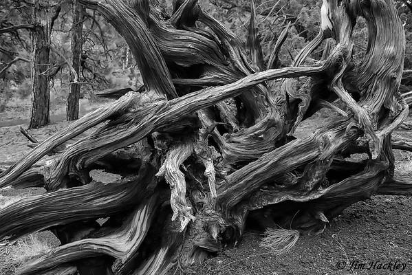 Flowing Roots