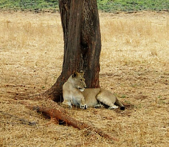 Cindys photos from Tanzania