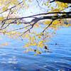 Fall In Centennial Park, Maryland