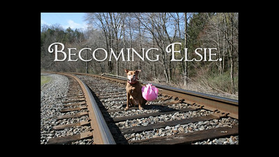 """Becoming Elsie"" The movie trailer. The story of Elsie's rescue and how she gives back to the world.  You can visit Elsie on Facebook here https://www.facebook.com/pages/Something-Elsie/200237223393067?fref=ts and give her a ""Like"". She loves ""Likes""."