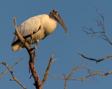 Stork Lookout