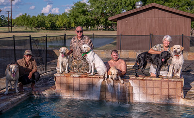Labrador swim party after a hot afternoon dove hunt @ Circle T Ranch
