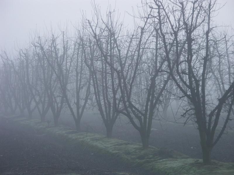 Fog Chill