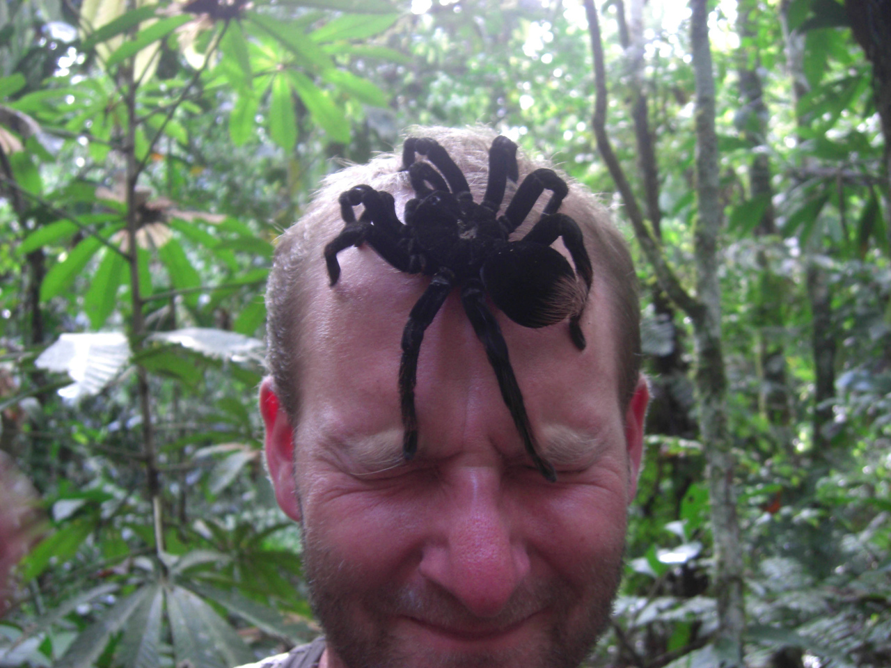 Tarantula on Patrick's face