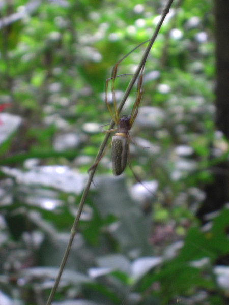 One of the deadliest spiders in te jungle