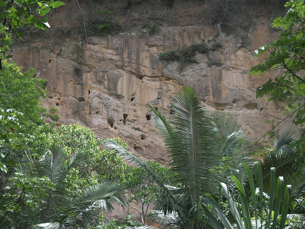 Parrot dwellings in the cliff