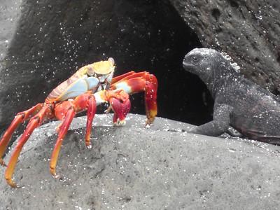Ecuador - Galapagos - Day 3 - Espanola - Trip 1
