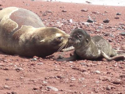 Ecuador - Galapagos - Day 6 - Rabeda Island