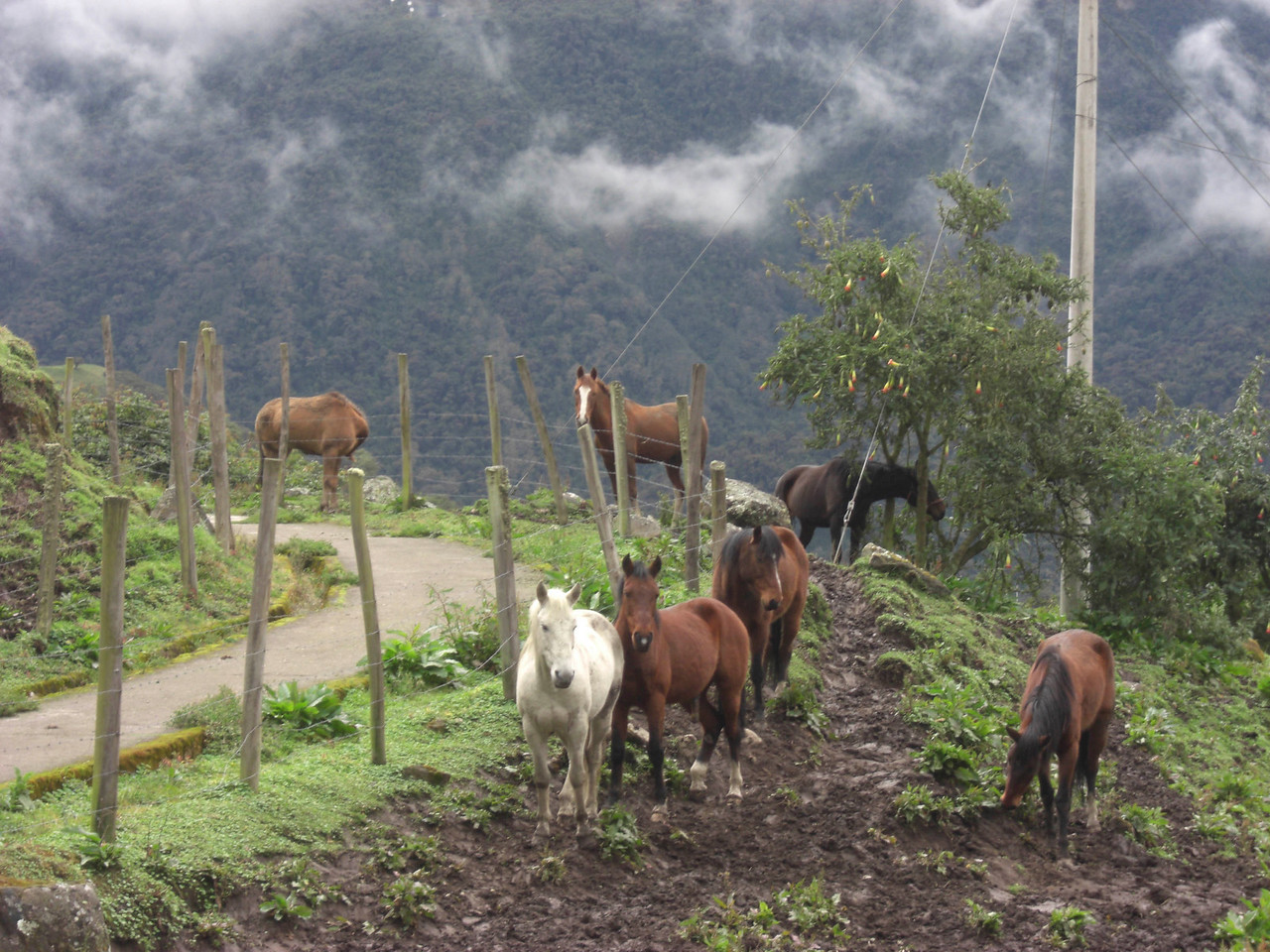 Life in the Andes