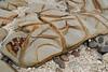 Tessellated rocks on the beach, Simeulu Islands, Sumatra