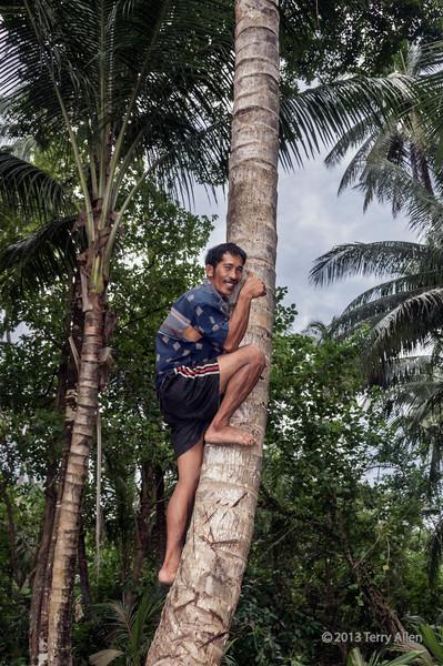 Copra worker hamming it up climbing a coconut tree, Simeulu Island, Sumatra (better at larger sizes)