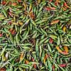Still life with peppers, Teluk Dalam market, Nias Island, Sumatra