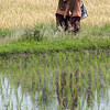 Two Minangkabau school girls sharing a secret, with reflections in a rice paddy, Solok, West Sumatra