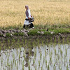 Curious girl and her reflection in the rice paddy, Solok, West Sumatra