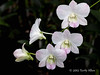 Orchids-1,-National-Orchid-House,-Singapore