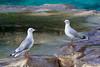 Gulls, Singapore bird park