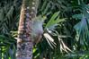 Staghorn fern, Singapore bird park