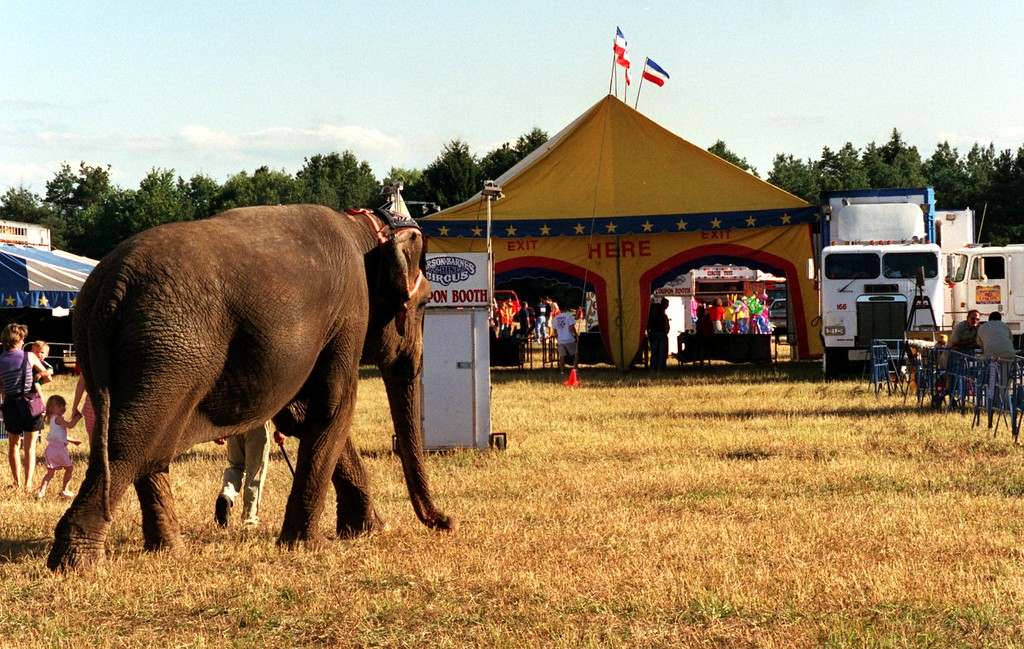 . A elephant cross the fair grounds outside the Carson & Barnes circus in Highland as his babysitter.