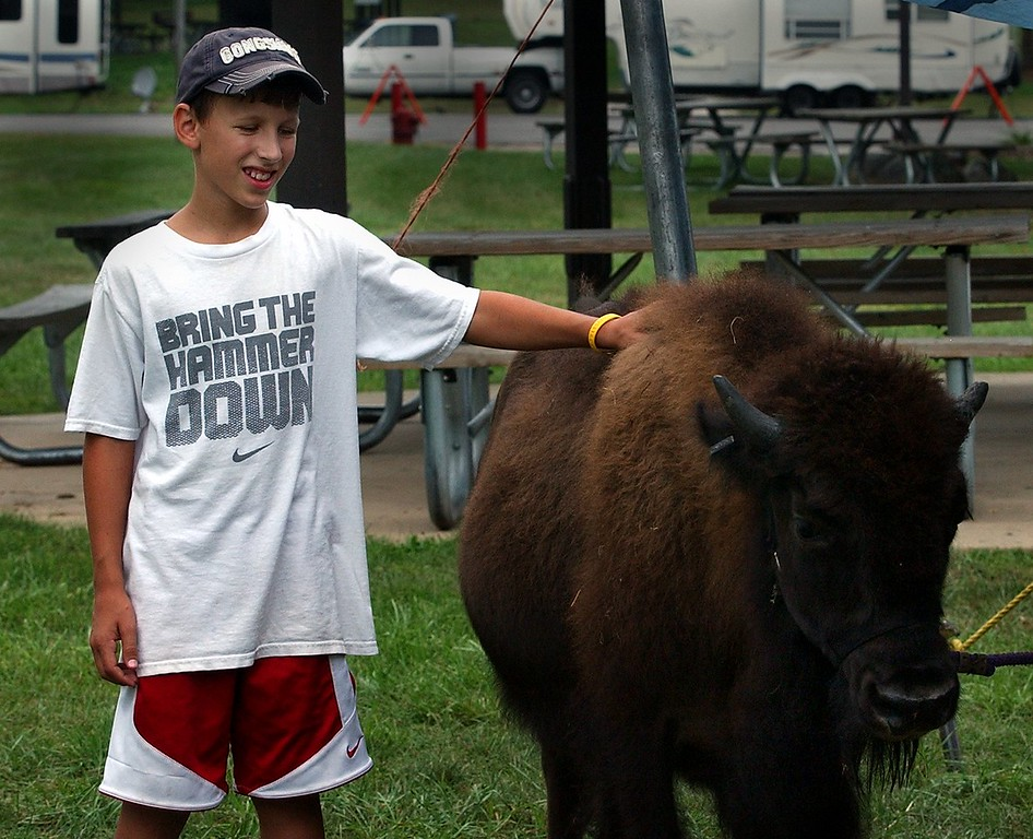 """. Rees Dobbs, 11, of Wixom, pets \""""Hugo\"""" a 1 1/2-year-old American Bison while at the Kelly Miller Circus at Gilbert Willis Park in Wixom. (Oakland Press Photo: Vaughn Gurganian)"""
