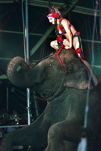 Willis Park circus-Packaderm
