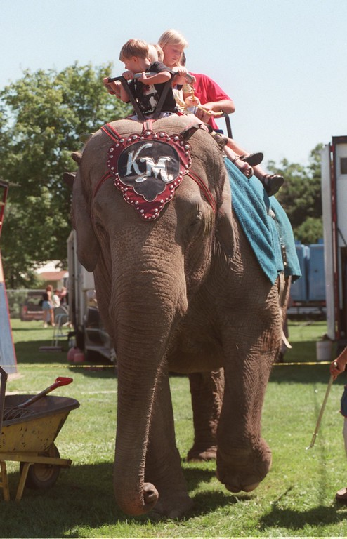 . Several people hop on for an elephant ride at a circus in Holly, Mich., Sunday, July 11, 1999.