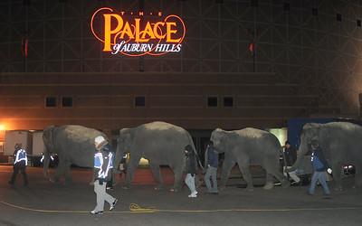 JJ Circus animals